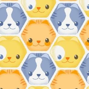 Hexy Cats