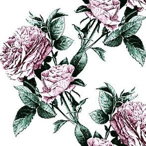 climbing roses mauve