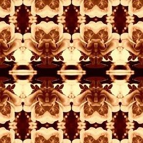 Rose Evolution in Brown - Tan