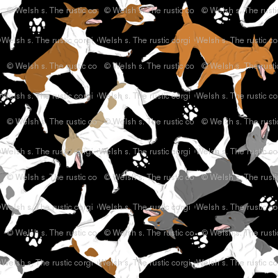 Trotting Rat terriers and paw prints - black