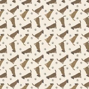 Tiny Dutch Shepherds - tan