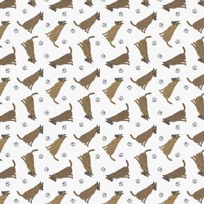Tiny Dutch Shepherds - gray