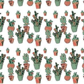 Impressions of Succulents
