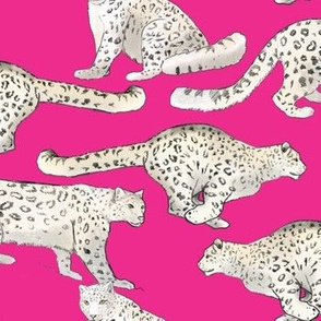 Snow Leopards on Magenta
