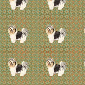 Biewer Terrier for Pillow