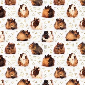 Lots of Tiny Guinea Pigs