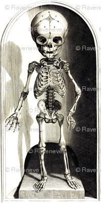 skulls bones skeletons anatomy gothic death vintage monochrome black white antique children child
