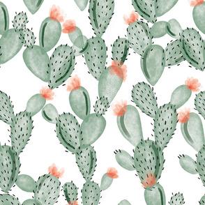green paddle cactus + rose