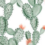 Rgreen-paddle-cactus-with-rose_shop_thumb
