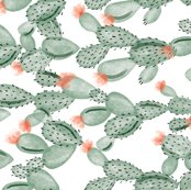 Rgreen-paddle-cactus-rotated_shop_thumb