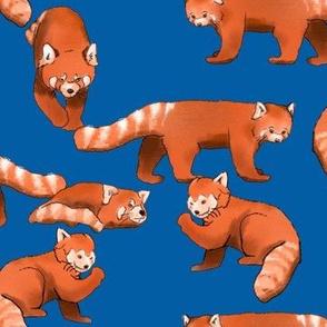 Red Panda on Blue