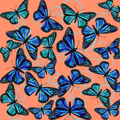 Butterfly Blues on orange