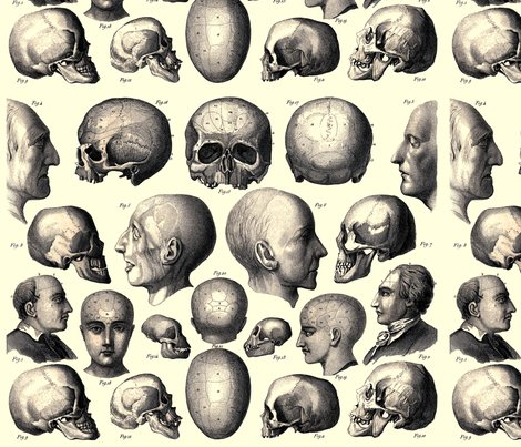 Rspoonflower_anatomy_3_shop_preview