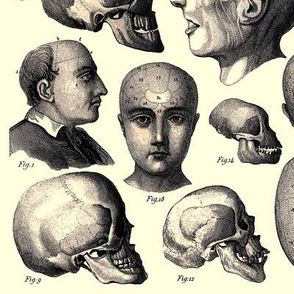 skulls skeletons anatomy anatomical studies portraits humans man side men profiles vintage antiques