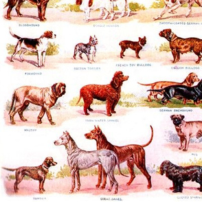 dogs puppy puppies identification charts Gordon setter Irish setter English Setter Yorkshire Terrier Greyhound Grayhound Russian Wolfhound Italian Greyhounds Bull Terriers English Pointers Scottish Deerhounds Rough Coated German Pointer Black and Tan Terr