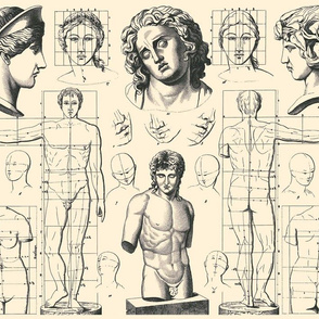 anatomy neoclassical Rome roman Greece Greek statues men women people anatomical studies portraits ratios baroque rococo antique body bodies faces