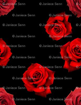 Scattered Red Roses on Black