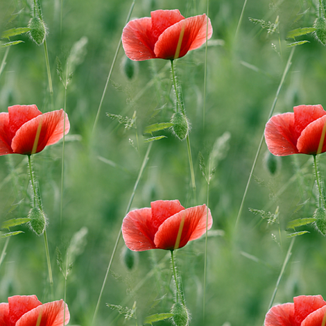 red poppy fabric by stofftoy on Spoonflower - custom fabric