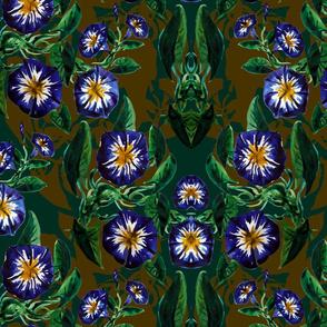 Violet bindweed