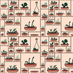 Succulents Nursery