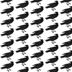 Star Map Crow
