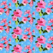 hibiscus confetti