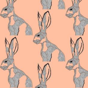 hare_tangerine