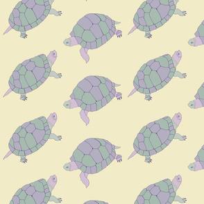 turtle_tortoise