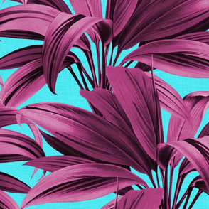 Cordyline Princess Margaret Pink Aqua