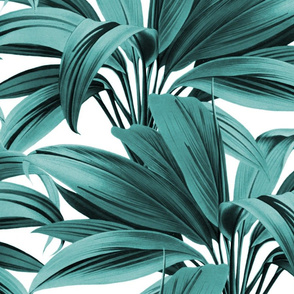 Cordyline Princess Margaret Teal