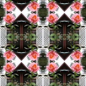 Trellised Pink Roses Reflected, M