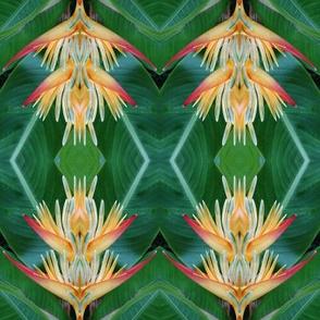 florascope 11