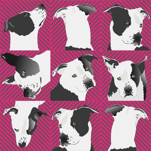 Little Spotted Dog-pink background
