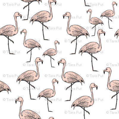 Pink Flamingos on White - Smaller Print