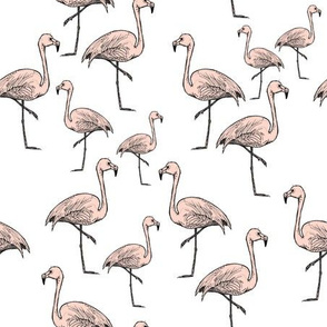 Pink Flamingos on White - Smaller Print