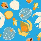 Cape Gooseberries (Blue)