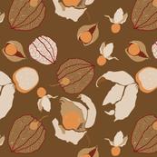 Cape Gooseberries (brown)