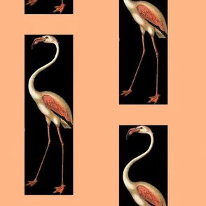 Flamingo Crazy
