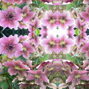 Pink petals with pistils