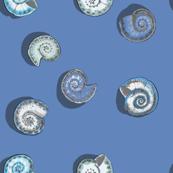 Blue marine Freshwater snail river shells pattern