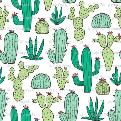 Cactus on White Smaller