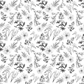 Wildflowers in black and white small print