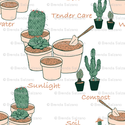 Potting time with cactus plants by Salzanos