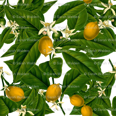 Lemon Botanical ~ White ~ Small