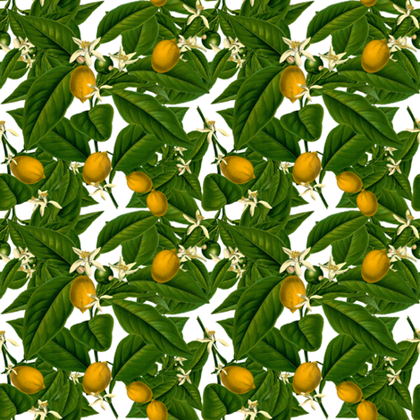 Lemon Botanical ~ White ~ Small fabric by peacoquettedesigns on Spoonflower - custom fabric
