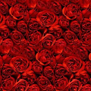 Rose Plethora