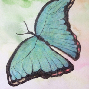 butterfly_watercolor_pencil