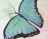 Butterfly_watercolor_pencil_thumb