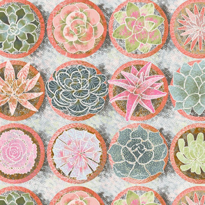 ma_collection_de_succulents