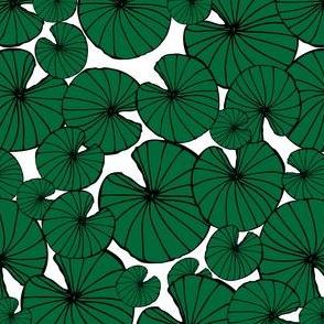 Lilypad Splash